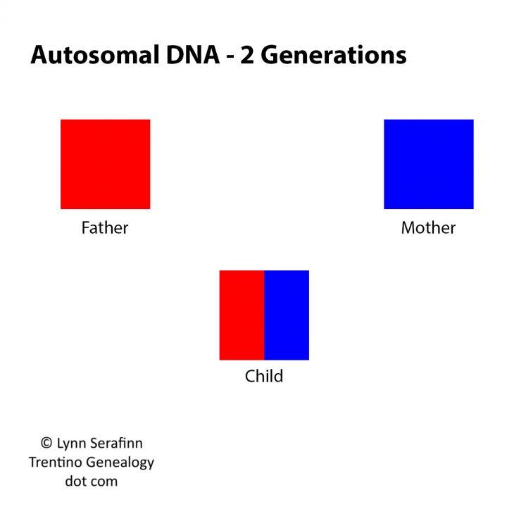 Autosomal DNA - 2 Generations