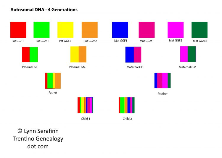 Autosomal DNA, 4 Generations. Diagram by Lynn Serafinn, http://trentinogenealogy.com